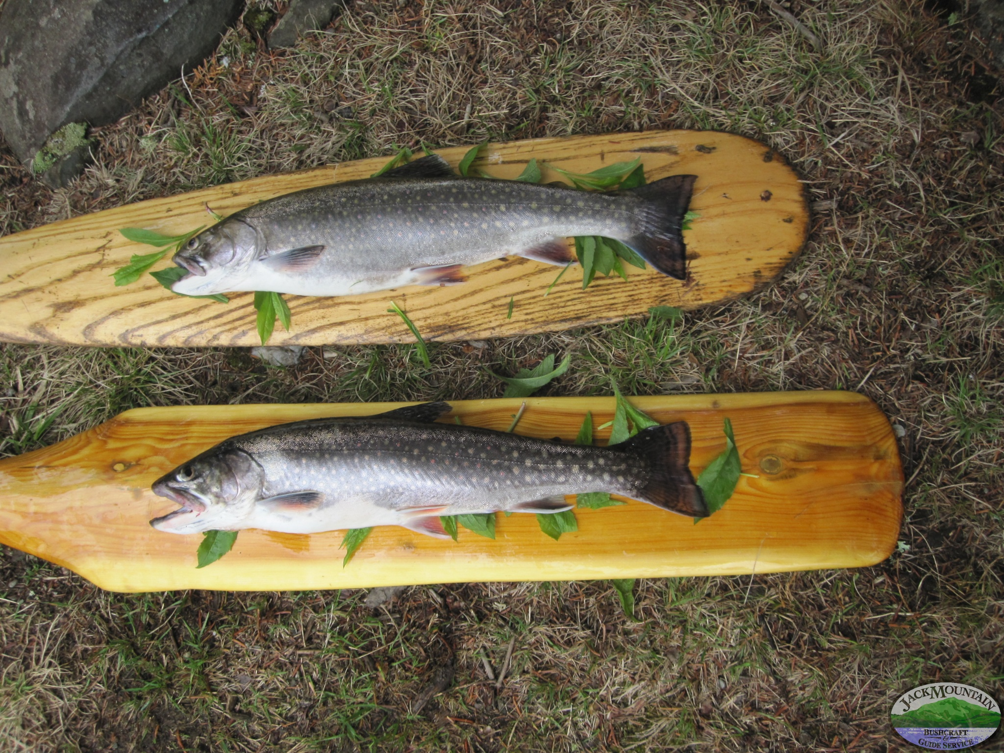 Allagash Brook Trout
