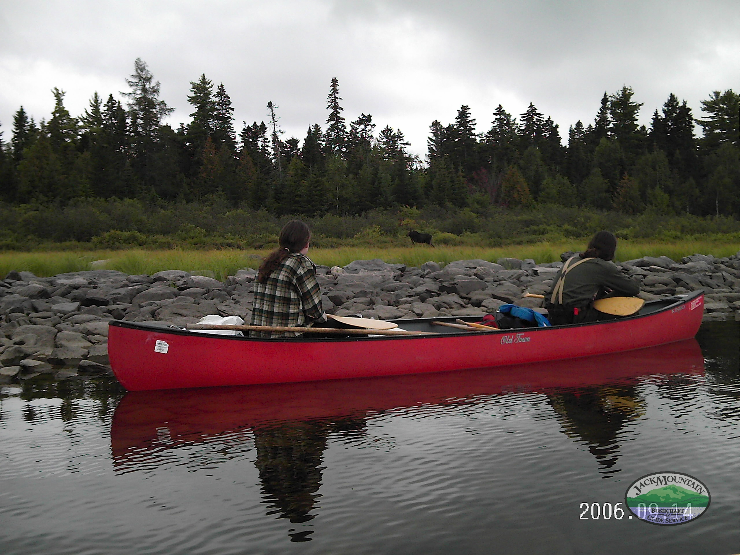Paddling Past A Moose